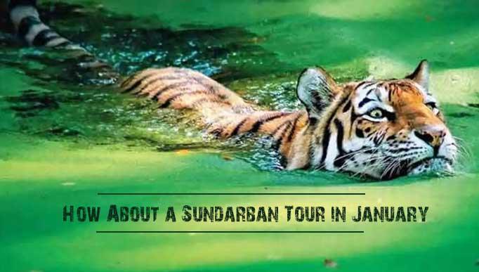 Sundarban Tour in January