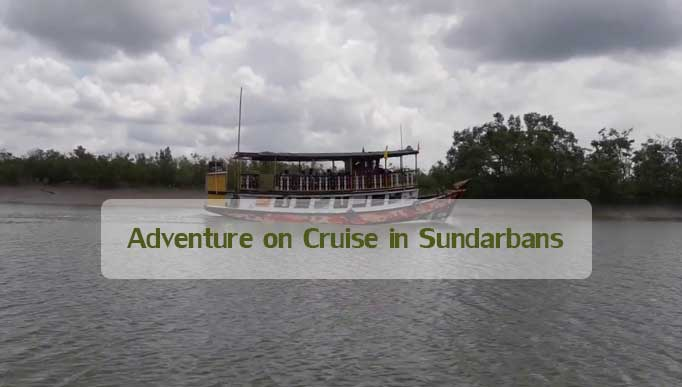Adventure on Cruise in Sundarbans
