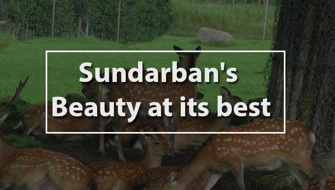 Sundarban's beauty at its best