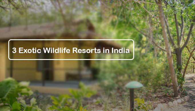3 Exotic Wildlife Resorts in India