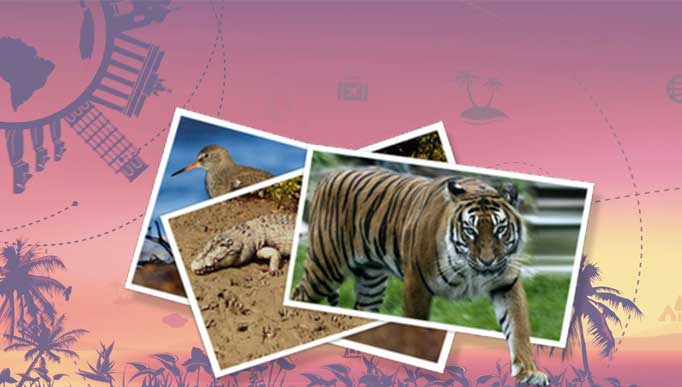 Travel Agent in Sundarban