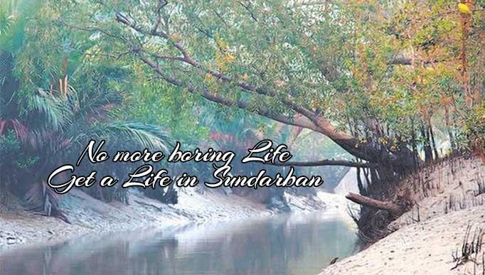 Life in Sundarban