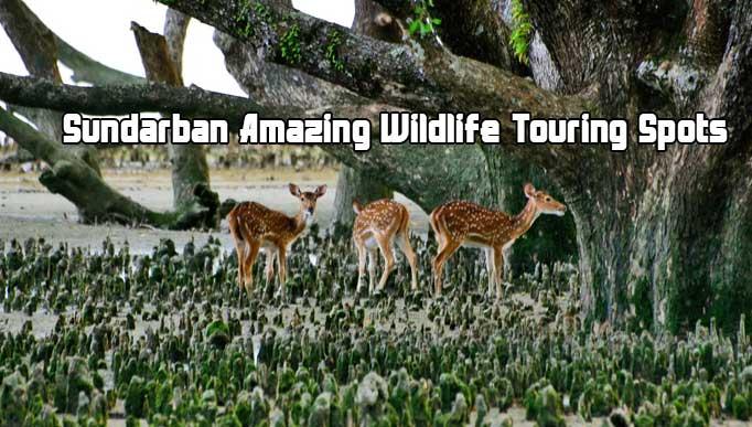 Sundarban Amazing Wildlife Touring Spots