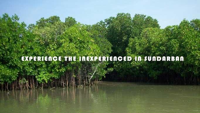 inexperienced in Sundarban