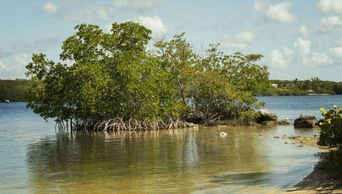 New Year Is in- Let's Celebrate it in Sundarban