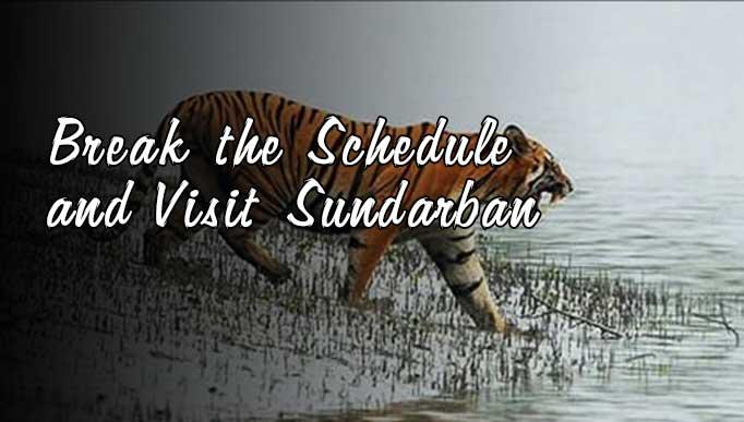 Break the Schedule and Visit Sundarban
