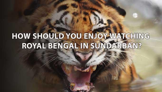 Royal Bengal