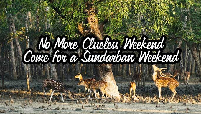Sundarban Weekend